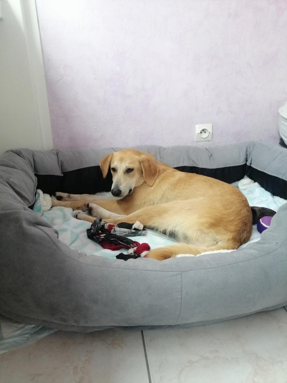 Appy- femelle- fourrière de Târgu Frumos - Réservée adoption (68) Img_2014