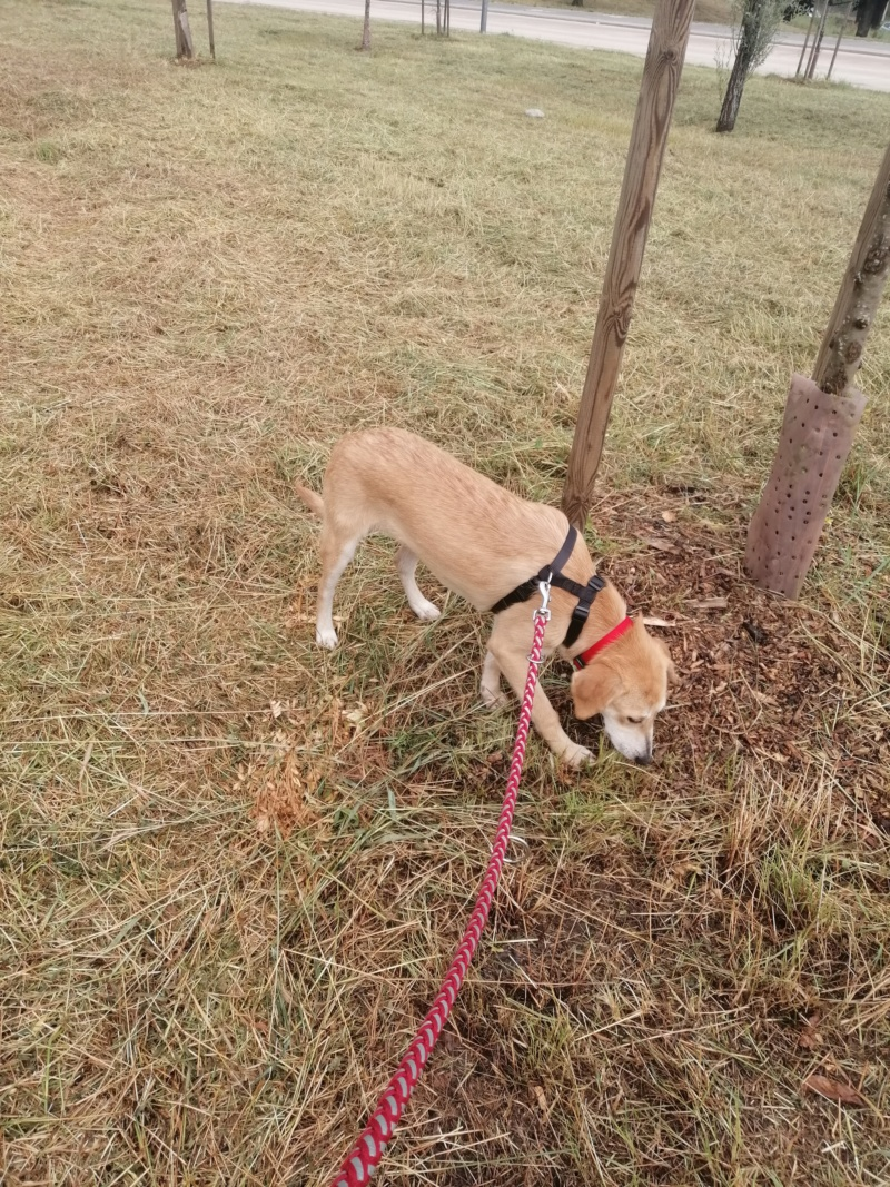 Appy- femelle- fourrière de Târgu Frumos - Réservée adoption (68) Img_2018