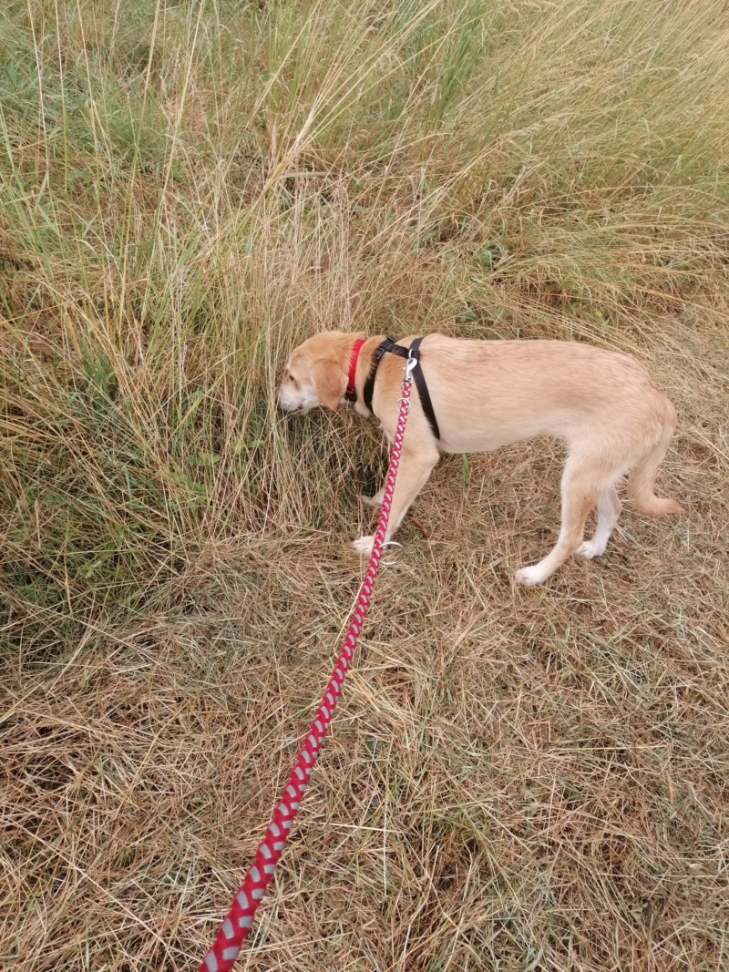Appy- femelle- fourrière de Târgu Frumos - Réservée adoption (68) Img_2019