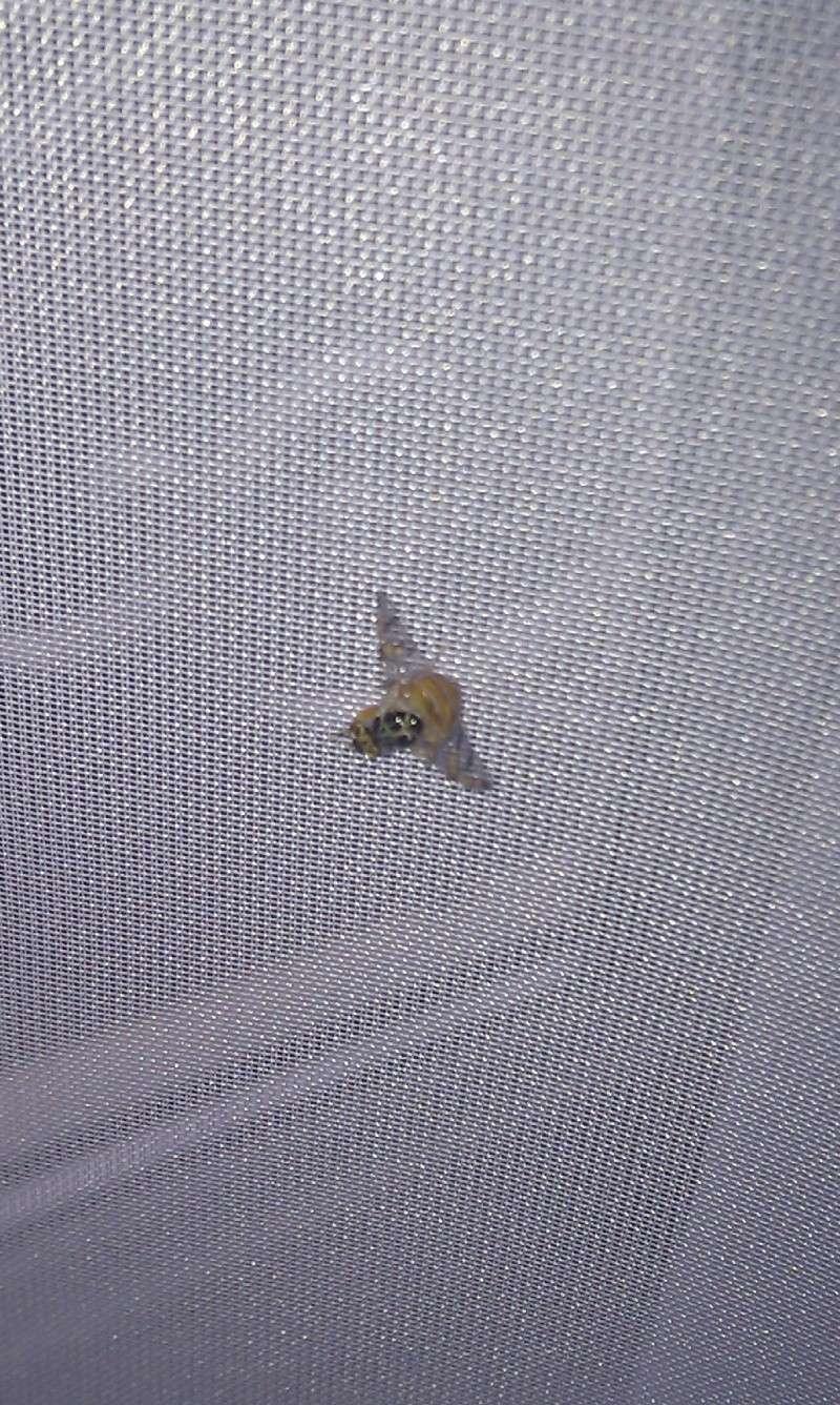 D'où peuvent venir ces sortes de mouches ? [RESOLU] Imag0111