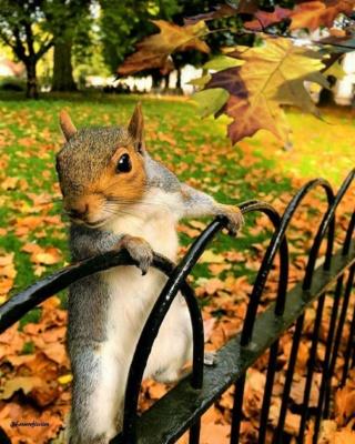 Belles images d'automne  43636010