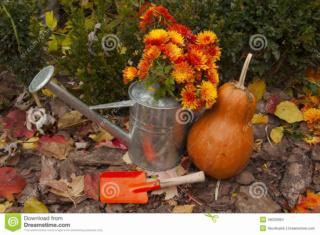 Belles images d'automne  Belle-10