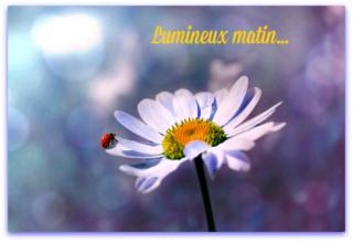 Belles images trouvées sur Pinterest  - Page 2 F92cca10