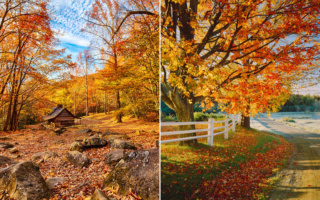 Belles images d'automne  Foliag10