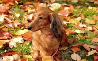 Belles images d'automne  Hd-ani10