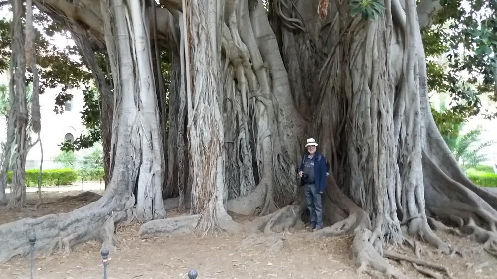 Les arbres de Colbert 0312