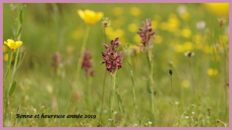 Meilleurs voeux Orchid10