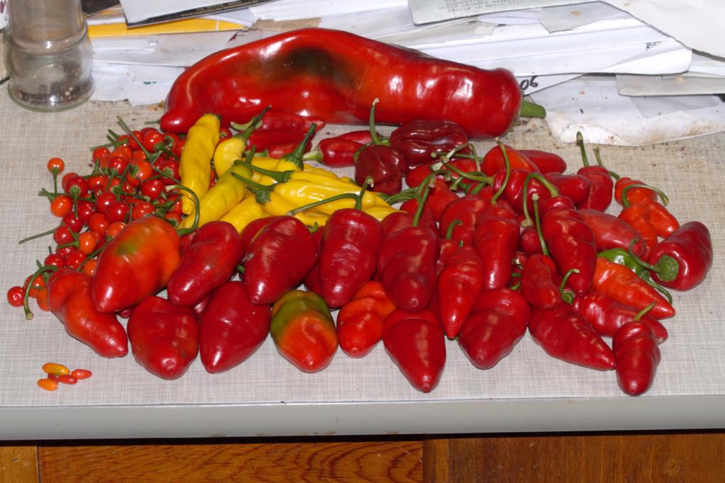Solanaceae - Tomaten & Chili, aber auch Petunien und andere Schönheiten ;) - Seite 96 Dsc04617