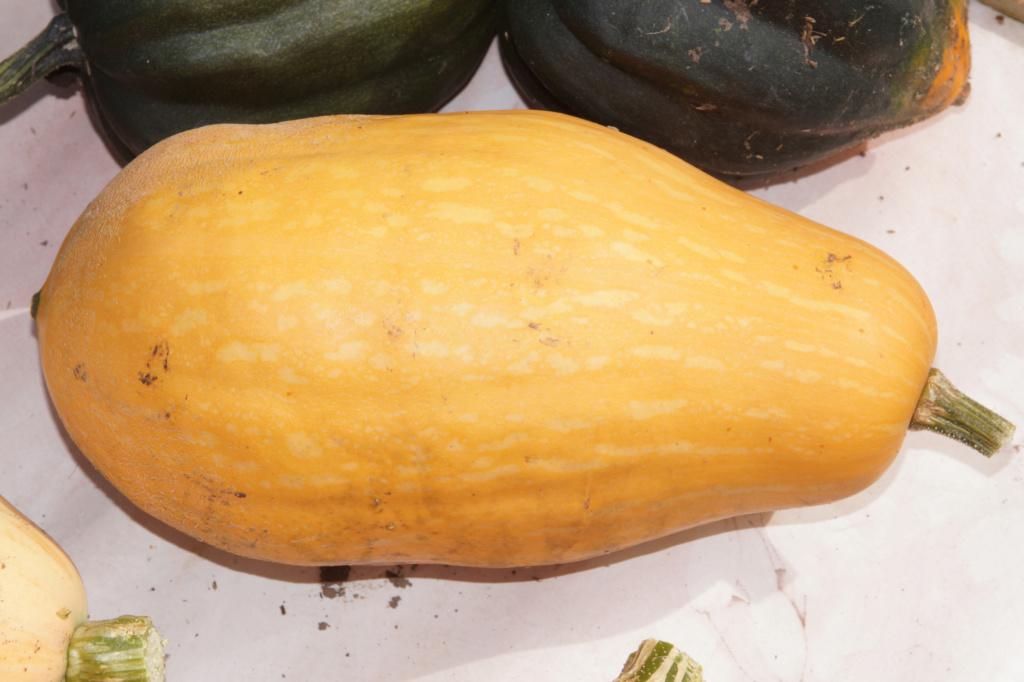 Kürbisgewächse - Cucurbitaceae: Melonen, Gurken, Kürbisse und Zucchini - alle Verteter der nichtsukkulenten Arten - Seite 17 Dsc04714