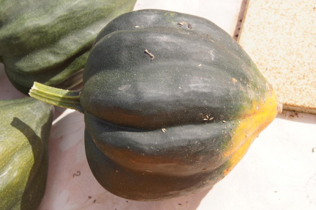 Kürbisgewächse - Cucurbitaceae: Melonen, Gurken, Kürbisse und Zucchini - alle Verteter der nichtsukkulenten Arten - Seite 17 Dsc04715