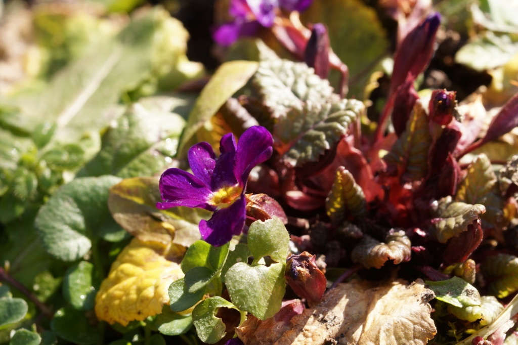 Erste Frühlingsboten im Garten und in Wald und Flur, Teil 2 - Seite 3 Dsc06412