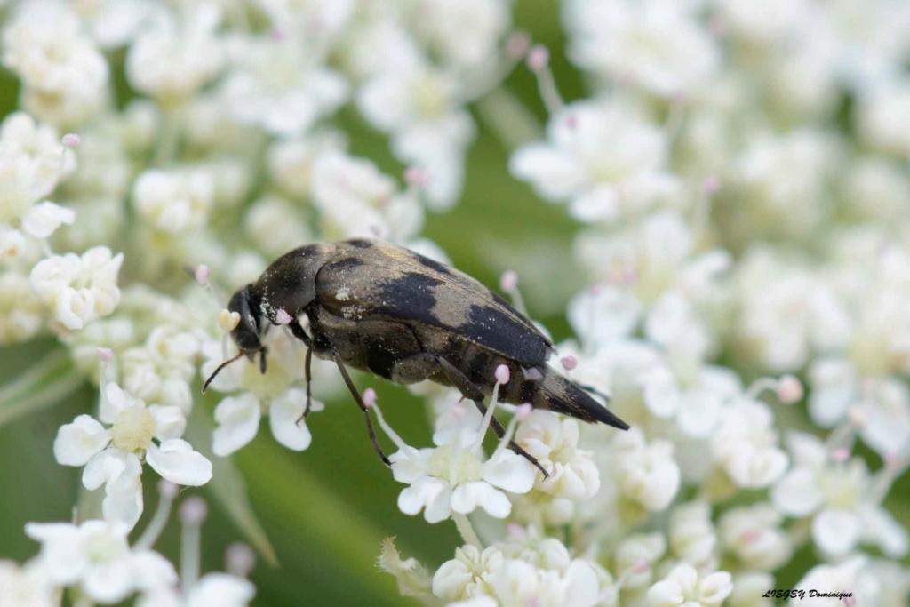 insecte inconnu  _dsc6010