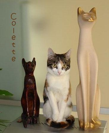 Collectionneur ou collectionneuse de chats. Chat-m10