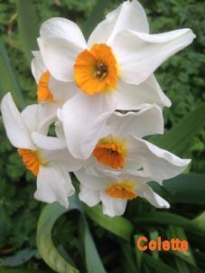 Les coloriages de Poppy ... - Page 11 Narcis12