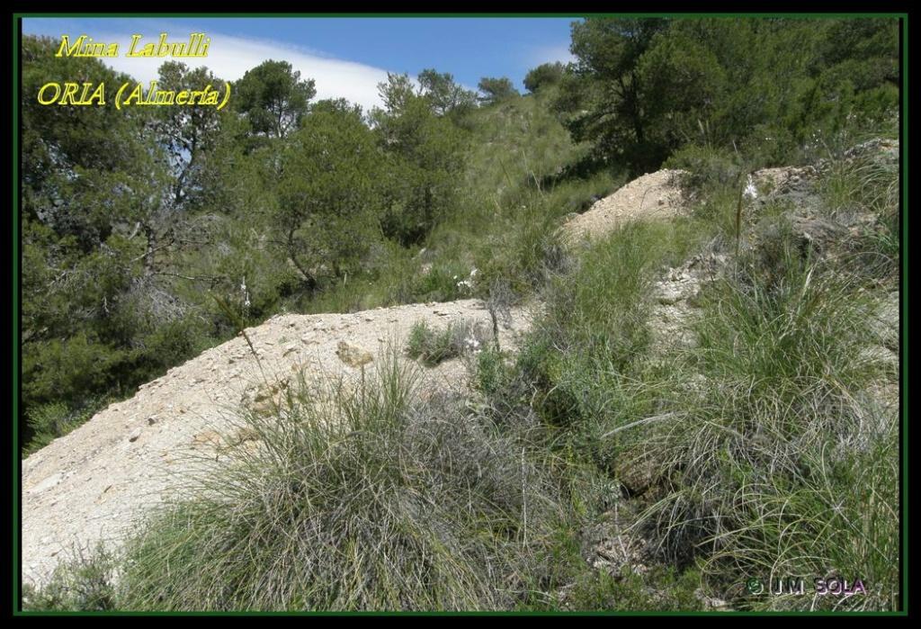 MINA DE DON JACOBO, MINA LOBULLI Y MINA CAÑARICO, ORIA (Almería) Labull10