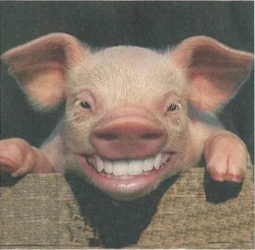 501éme en force !!! 21 782 dmg GLOPS tier 10 Piggy_10