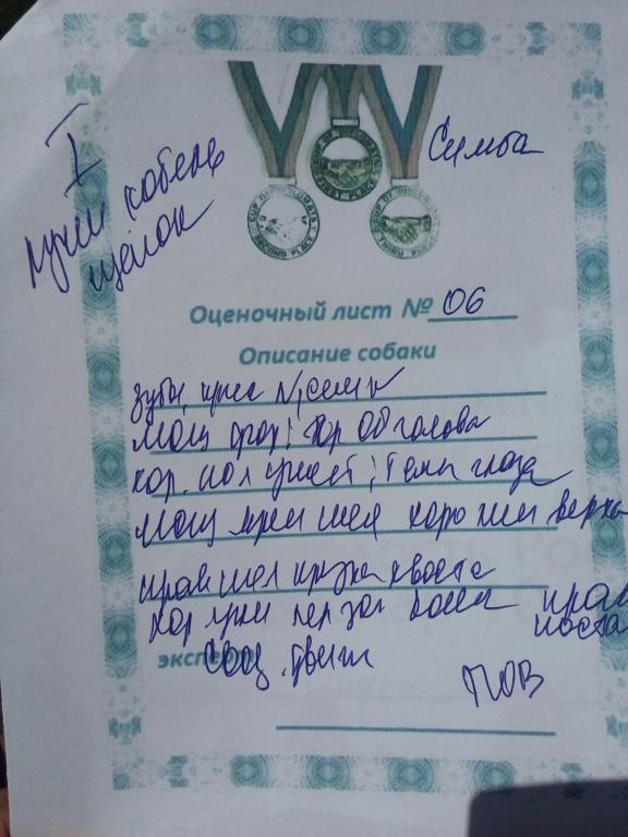 ВОСТОЧНО-ЕВРОПЕЙСКАЯ ОВЧАРКА ВЕОЛАР СИМБА - Страница 2 20180711