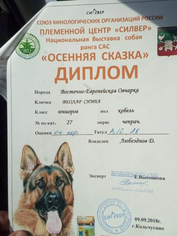 ВОСТОЧНО-ЕВРОПЕЙСКАЯ ОВЧАРКА ВЕОЛАР СИМБА - Страница 3 20180911