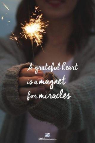 pensées positives gratitude cerises paupières vidéos citations  B1f37910