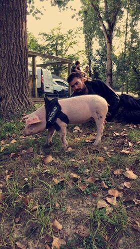 Covoiturage pour Peggy notre petite truie  Piggy_10