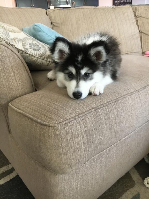 Is he a husky? 758fdd10
