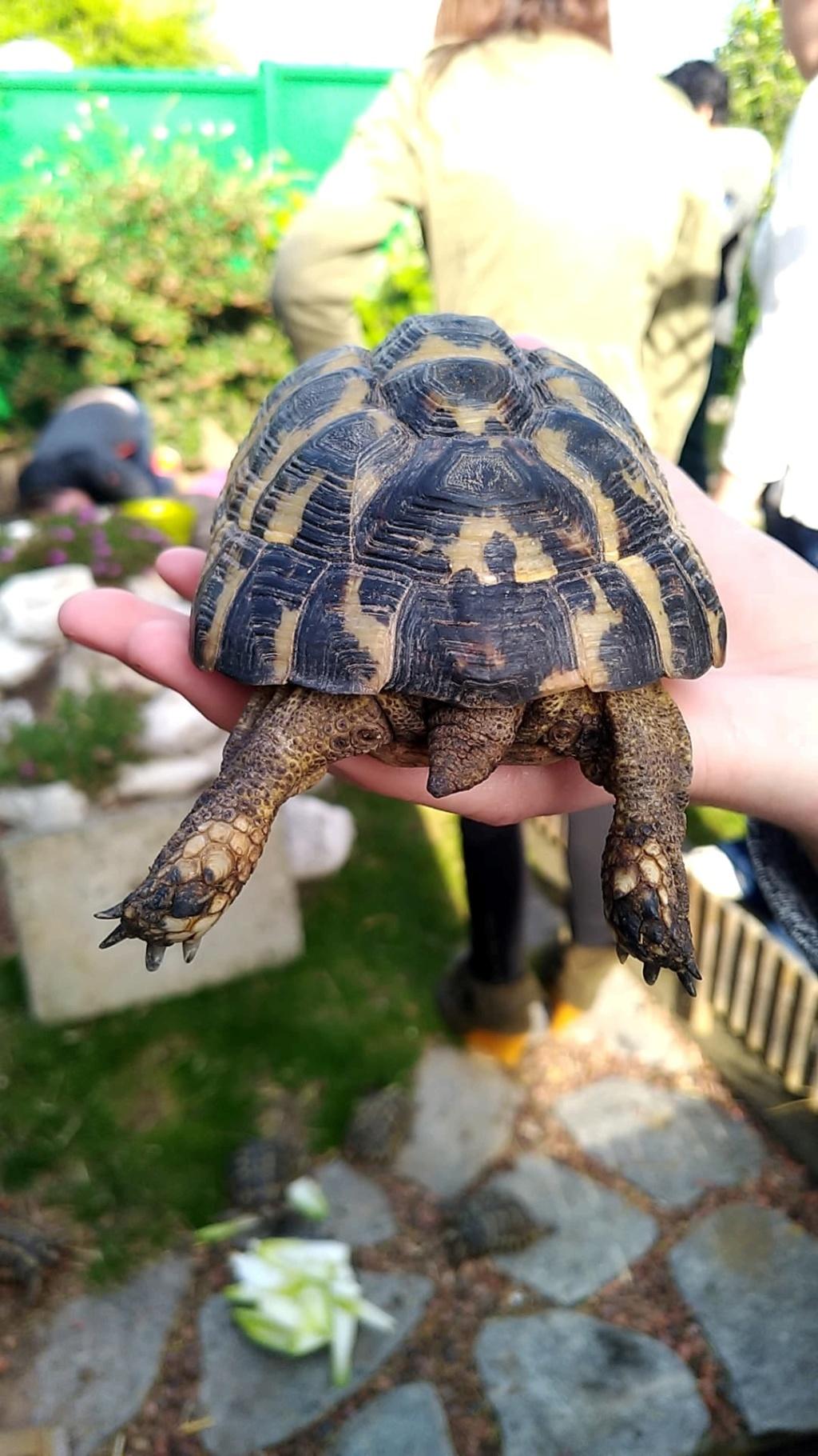 Identification de mes tortues Male_411