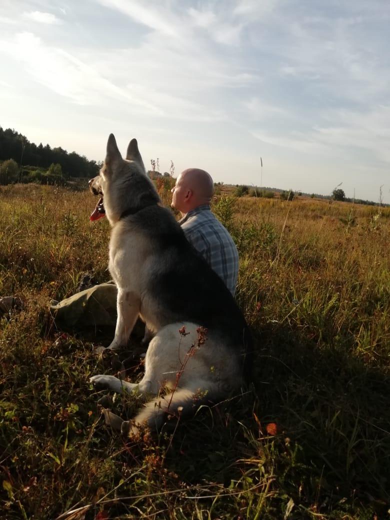 ВОСТОЧНО-ЕВРОПЕЙСКАЯ ОВЧАРКА ВЕОЛАР ГЕКТОР _a11
