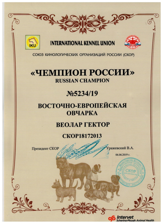 ВОСТОЧНО-ЕВРОПЕЙСКАЯ ОВЧАРКА ВЕОЛАР ГЕКТОР A_00110