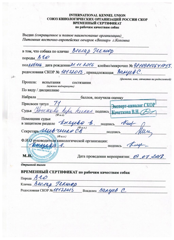 гектор - ВОСТОЧНО-ЕВРОПЕЙСКАЯ ОВЧАРКА ВЕОЛАР ГЕКТОР E1_00111