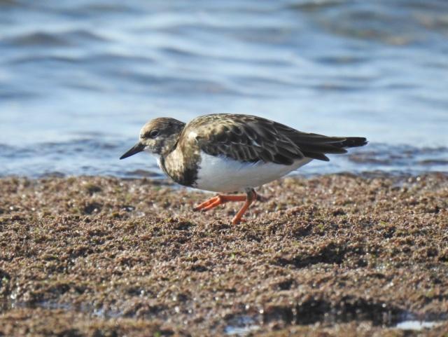 Fórum Aves - Birdwatching em Portugal - Portal 110