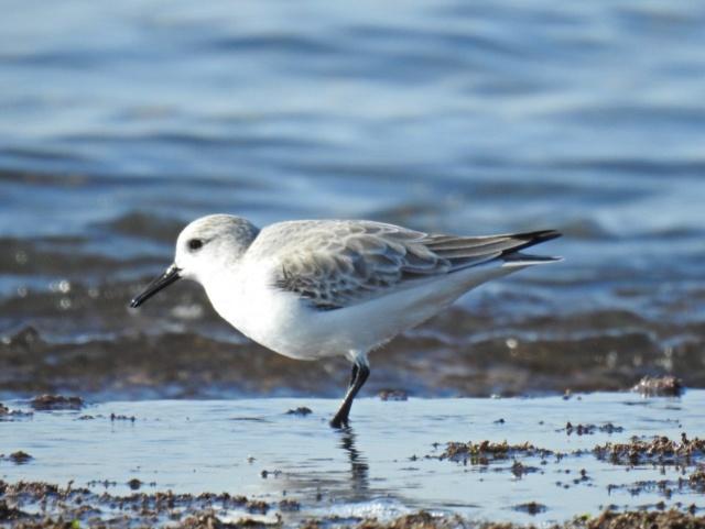 Fórum Aves - Birdwatching em Portugal - Portal 210