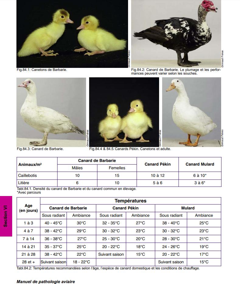 Manuel de Pathologie Aviaire Exempl12