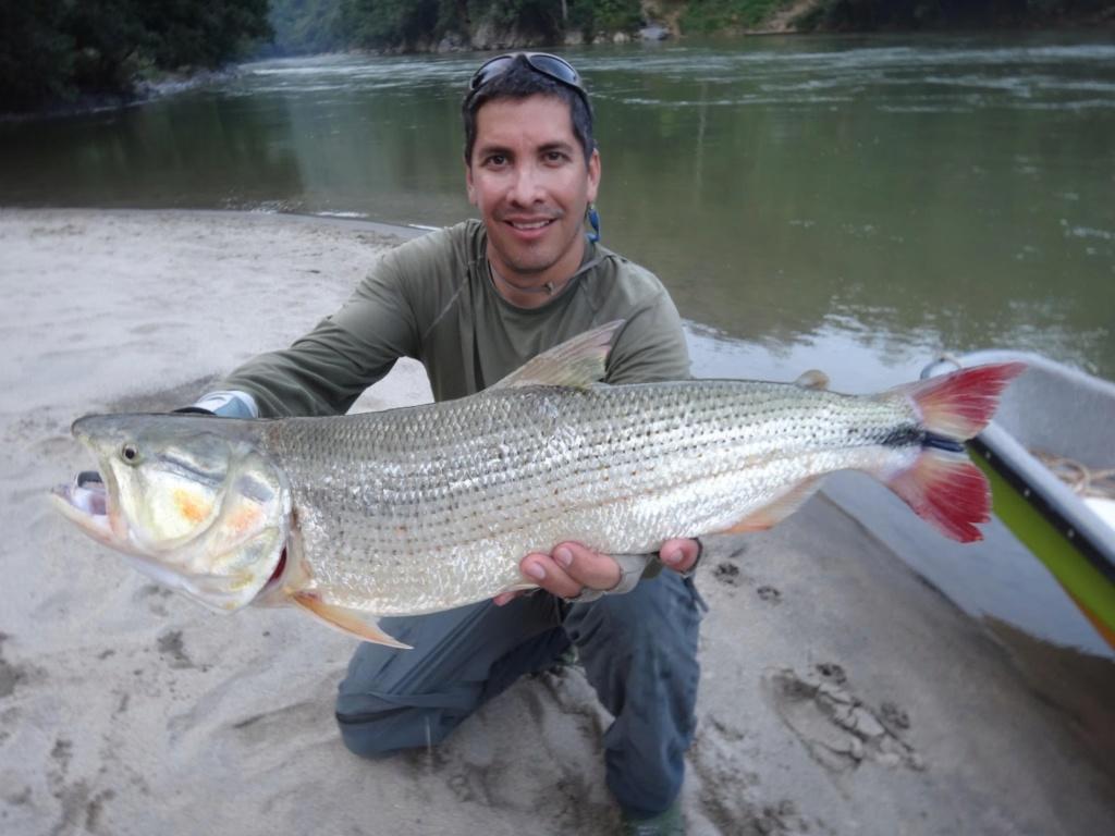 poisson de ouf colombien Primer10