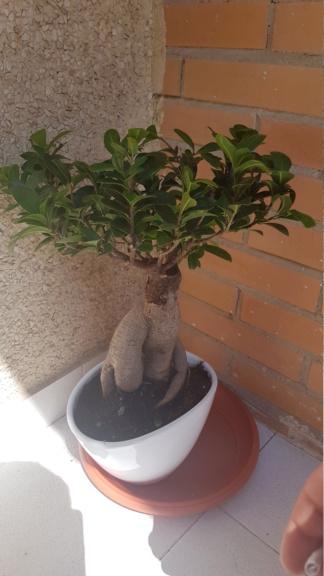 Hola! Saludos desde Jaén  soy nuevo  20190713