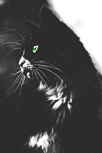 [Kitten search] Duistere liefdesbaby's V2 Medusa11