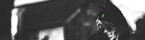 [Kitten search] Duistere liefdesbaby's V2 Medusa12