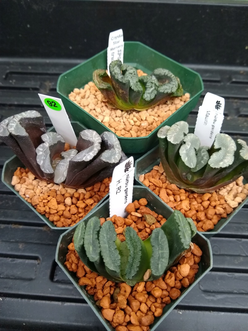 Cactus et succulentes chez Sougriwa (2021) - Page 3 Img_1199