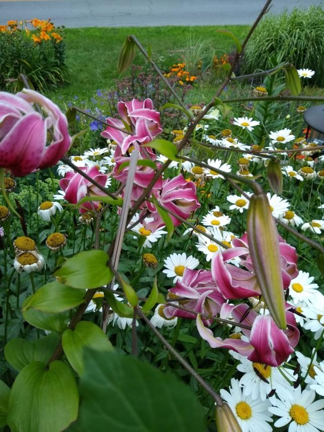 Saison hâtive au jardin de Soug (2021) - Page 25 Img_1377