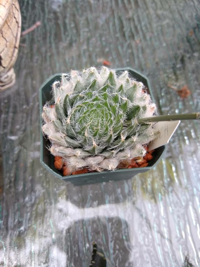 Cactus et succulentes chez Sougriwa (2021) - Page 4 Img_1402