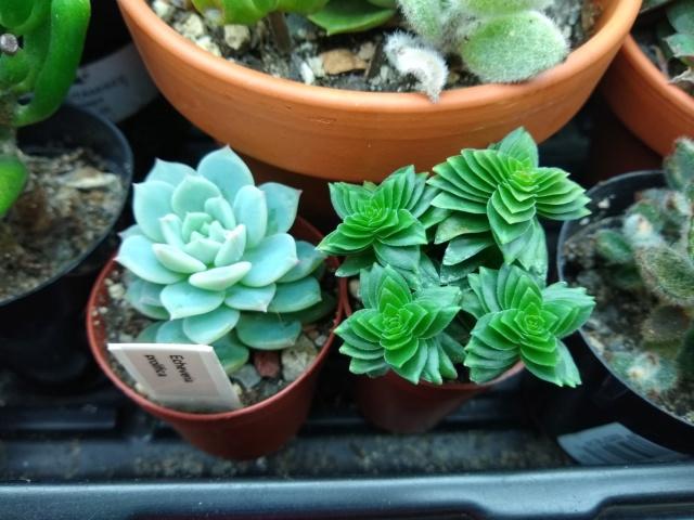 Cactus et succulentes chez Sougriwa (2020) Img_2137