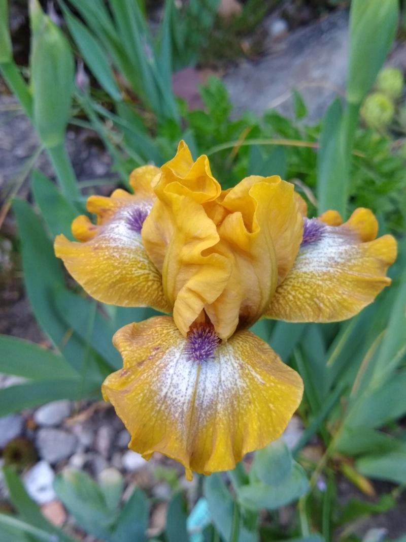 Les petits iris des commandes passées Img_2295