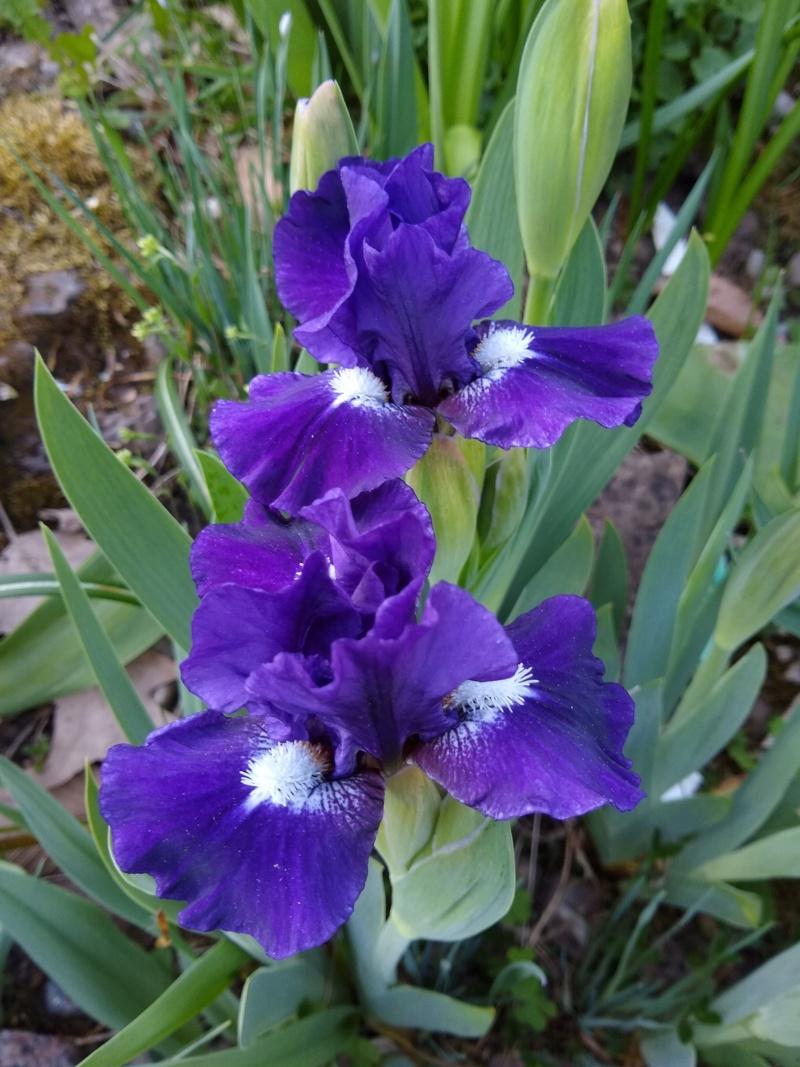 Les petits iris des commandes passées Img_2299