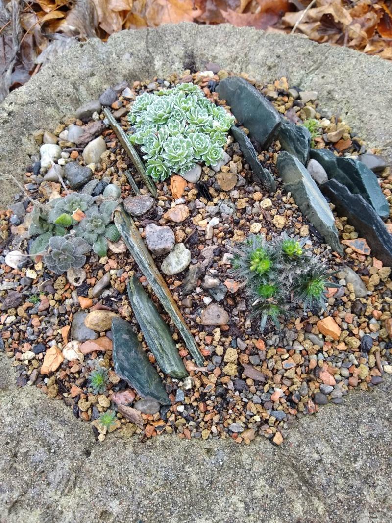 Saison hâtive au jardin de Soug (2021) Img_2914