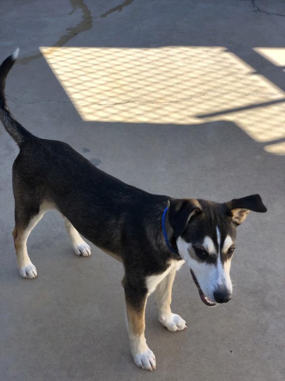 New dog owner  4595bd10