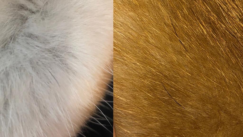 Темная мордочка. Чёрные жесткие волоски + стерилизация   Fab8a310