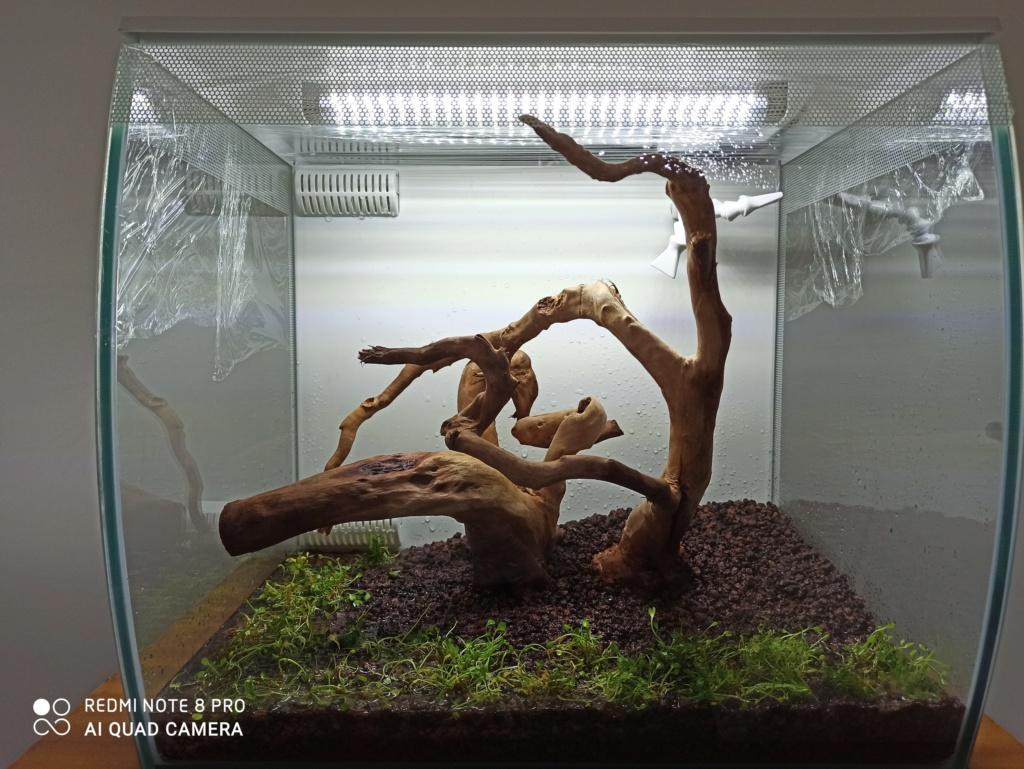 Flex 57L biotope asiatique Img_2017