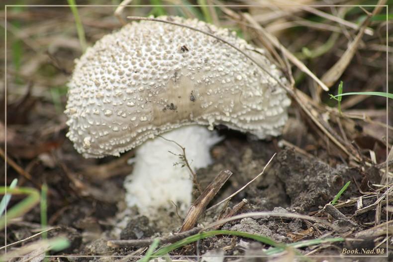 Les champignons 02092010