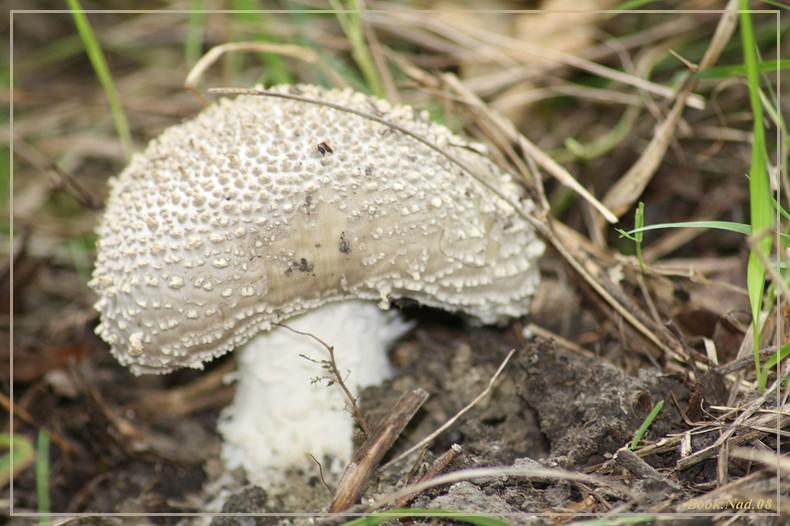 Les champignons 02092011