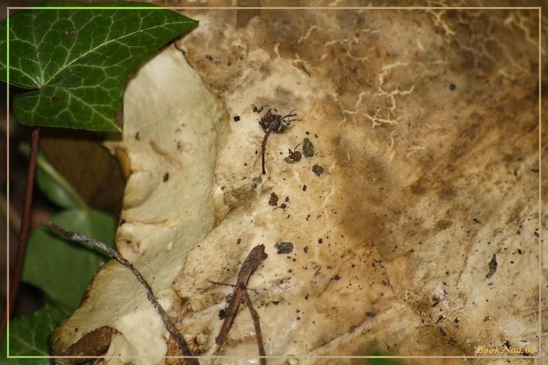 Les champignons 02092013
