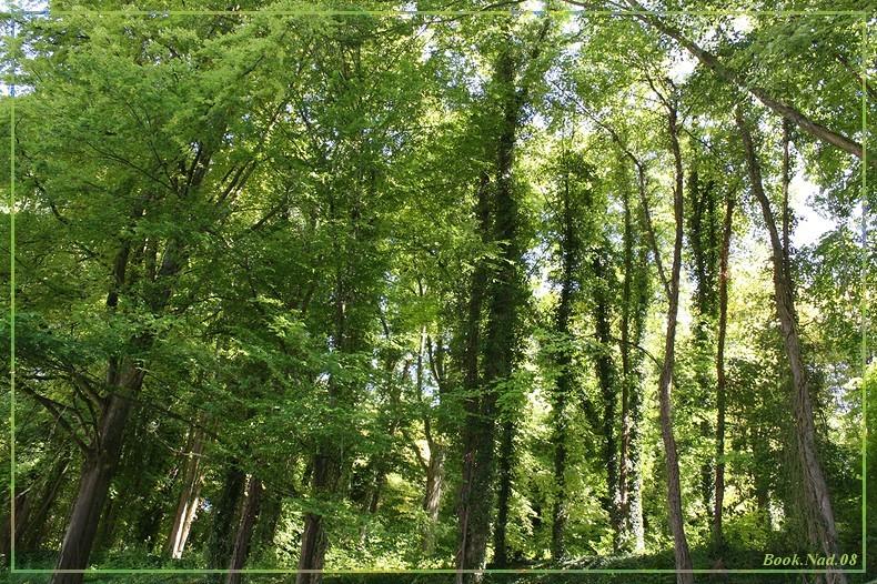 Les arbres en général 03072011